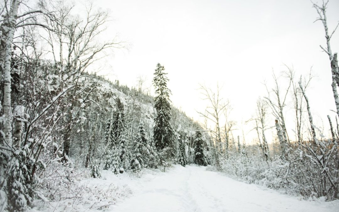 No Trail Necessary: 5 Snowshoe tips for beginners