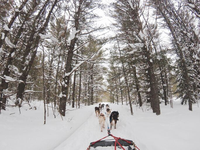 Dog Sledding Adventures for all Ages